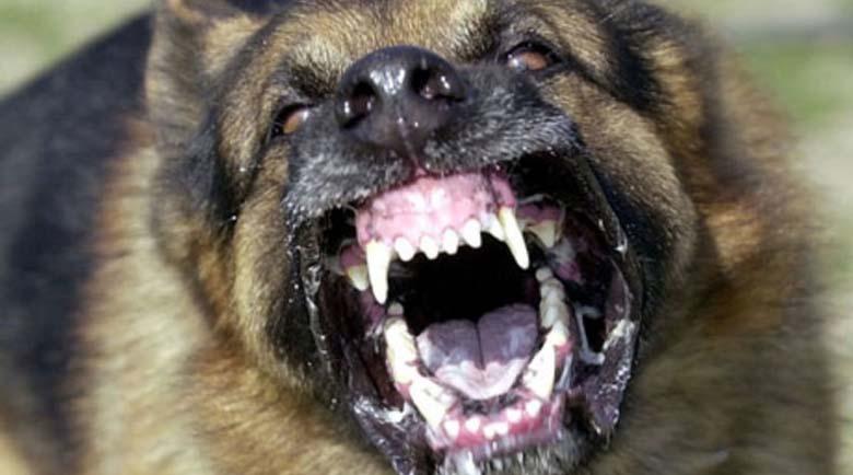 Полицията в Разлог разследва организиране на кучешки боеве в белишкото с. Краище