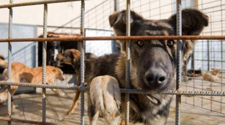Със 100 нови клетки община Благоевград решава проблема с бездомните кучета