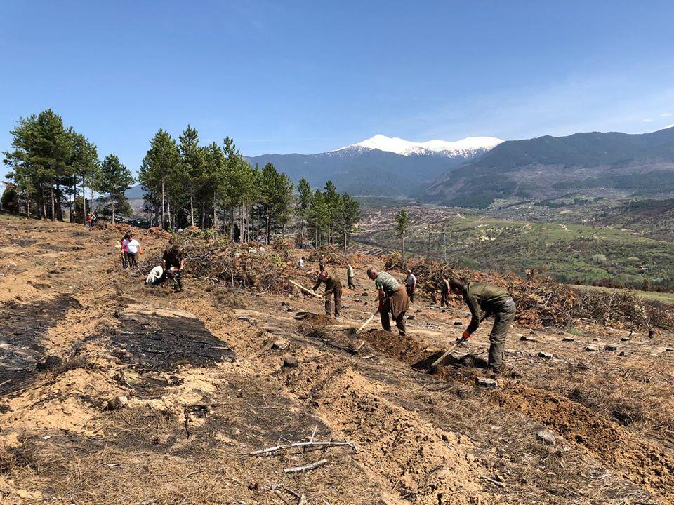 Цел: Възобновяват 3552 дка опожарени терени в районите на Кресна и Симитли