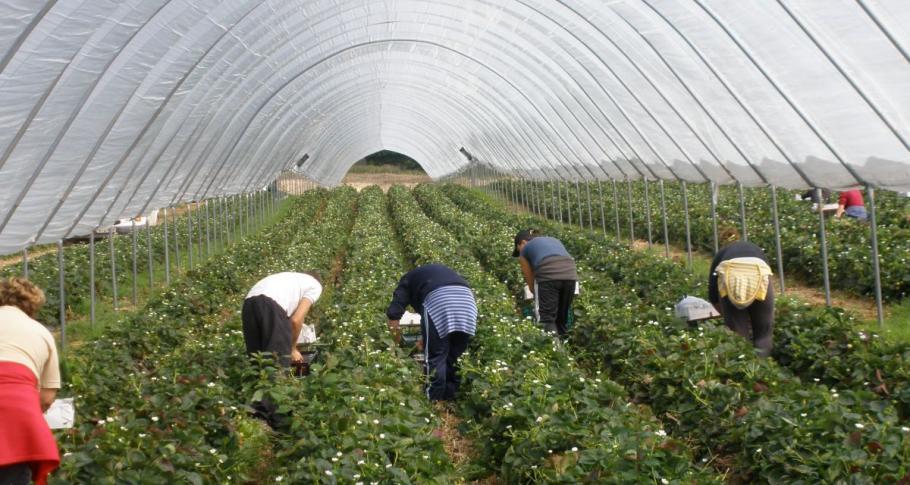 """""""Гардиън"""": Плодовете и зеленчуците на Острова свършват без работници от Източна Европа"""