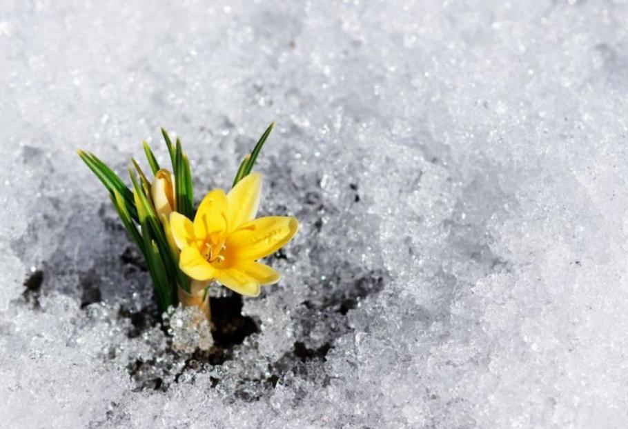 Снегът ще продължава да вали, на изток – дъжд