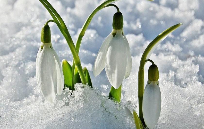 Студ и сняг, кога се връща пролетта?