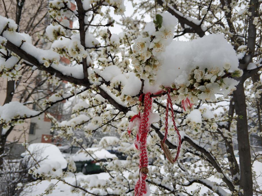 Снегът съсипа сливи, кайсии и праскови! Надежда за черешите и ябълките