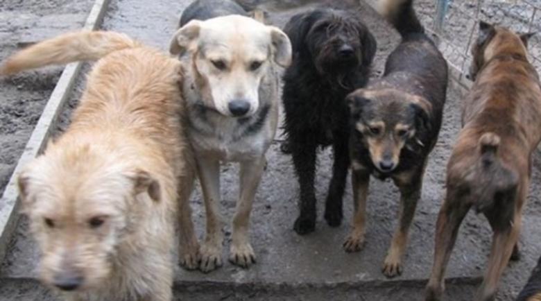 Благоевградчанка осъди община Благоевград, ухапал я уличен пес