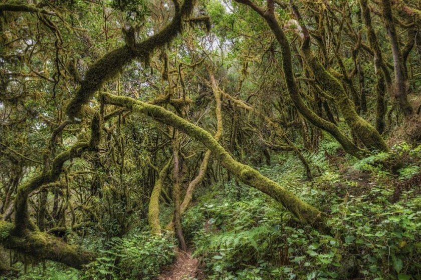 Откриха останки от дъждовна гора на 90 милиона години