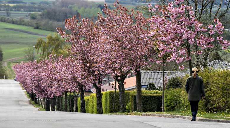 Отново валежи следобед, месец май идва със слънце
