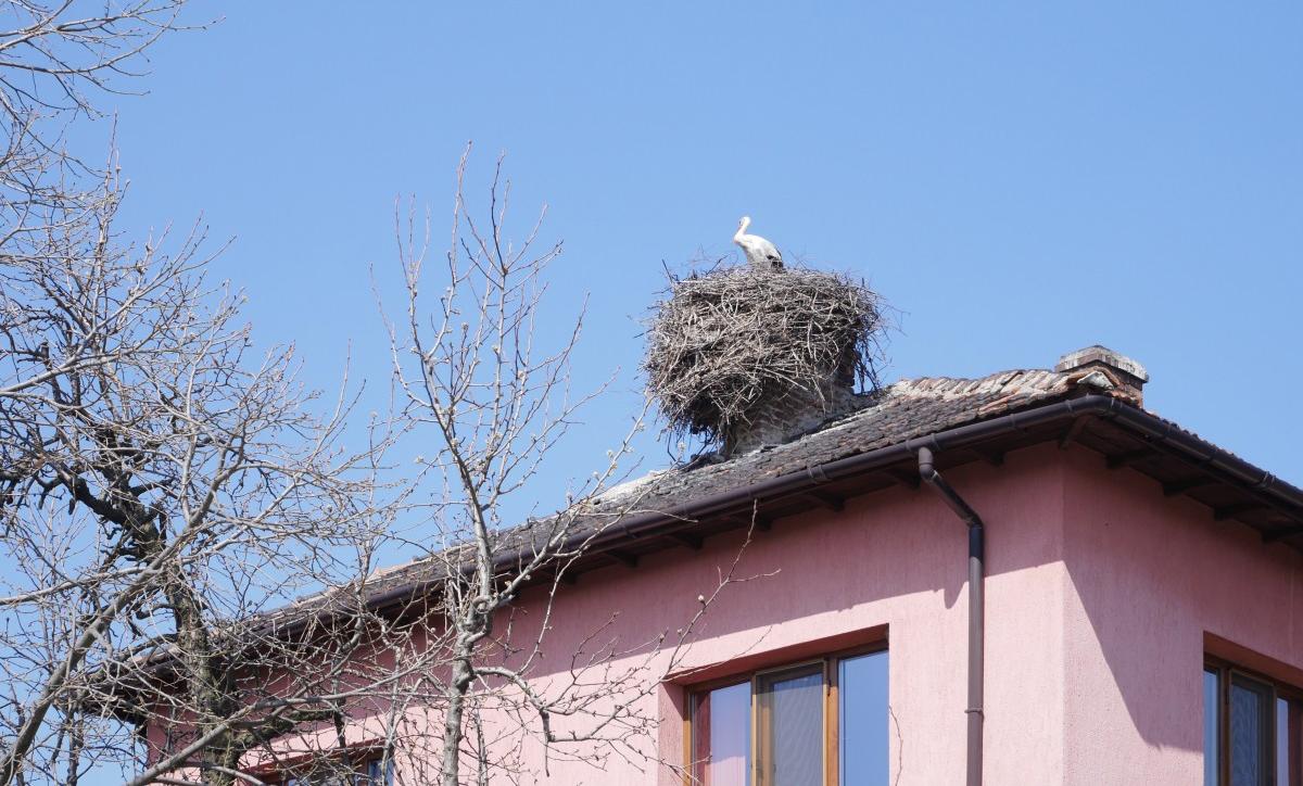 Прекрасно пролетно време на днешния Лазаровден