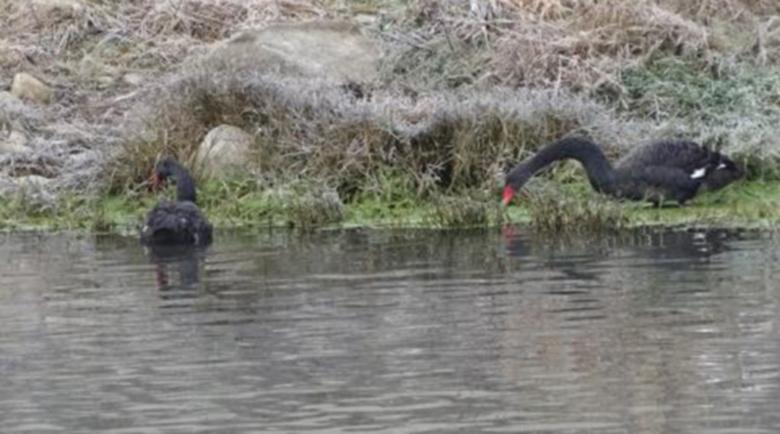 Река Струма отново е замърсена край Перник
