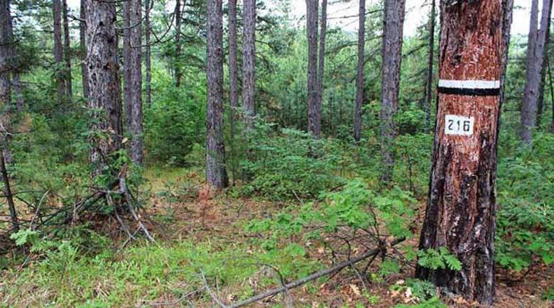 Без сеч в 1690 декара общински вековни гори в Кюстендилско
