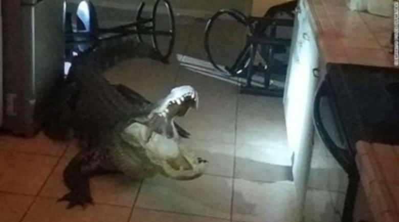 Крокодил влезе в къща в Луизиана
