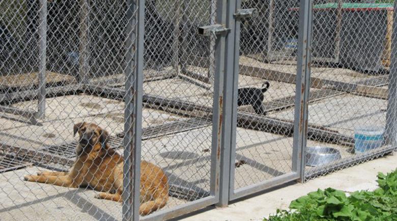Село се вдигна на протест срещу приют за кучета