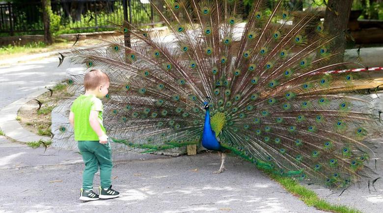 Зоопаркът в Благоевград започва да приема посетители от 25 май