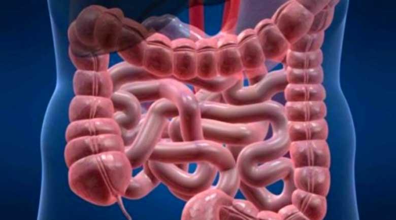 Лекари: Събираме 15 кила отрови в червата си!