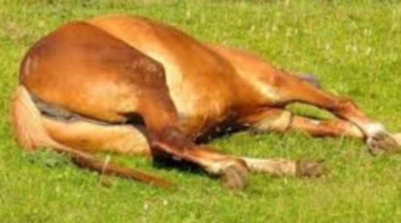 Разследват убийство на коне в Пороминово