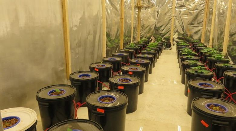 Полицията погна оранжерия за марихуана край Дупница