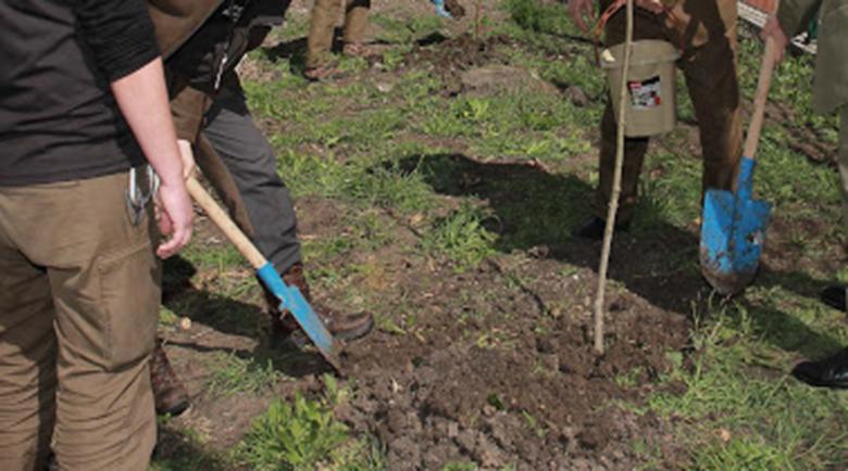Залесяват 22 декара в местността Средна Ридина край село Горно Хърсово