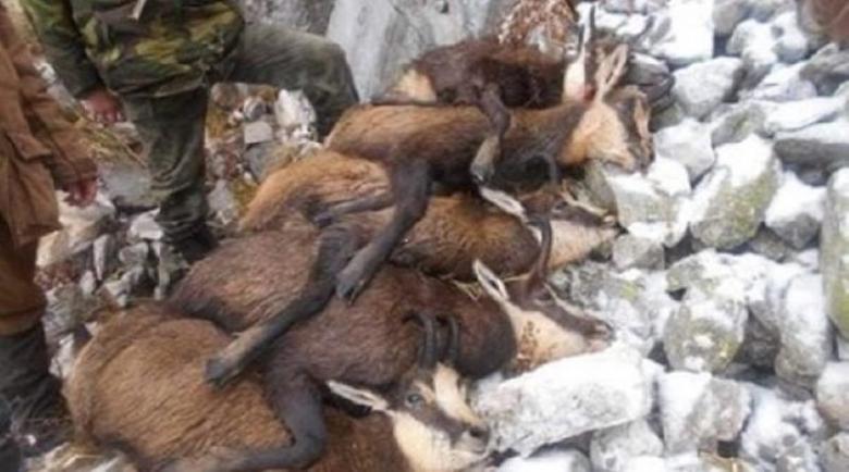 5 г. затвор за убиеца на бременните диви кози в Пирин