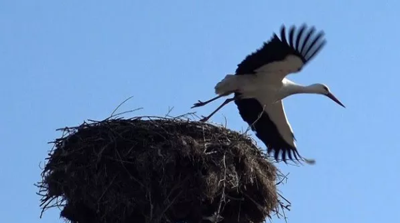Първият щъркел кацна в санданското село Струма за 10-а поредна година