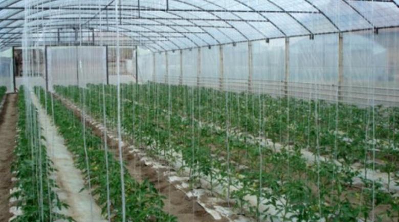 Оптимизъм! Разкриват 6 нови оранжерии в Петричко